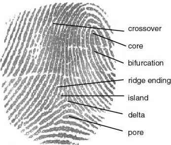 According to the Galton-Henry fingerprint classification scheme 1, there are 5 different classes of fingerprint...