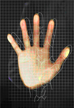 palm print recognition thesis A survey of palmprint recognition 1adams kong, 2david zhang, and 3mohamed kamel the inner surface of the palm normally contains three flexion creases.